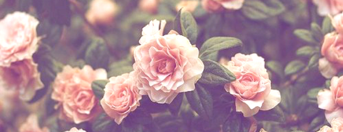 Facebook cover photos vintage flowers