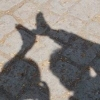 dendenden (avatar)
