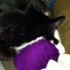 cat_knits (avatar)