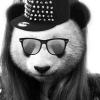 piggych3ryl (avatar)