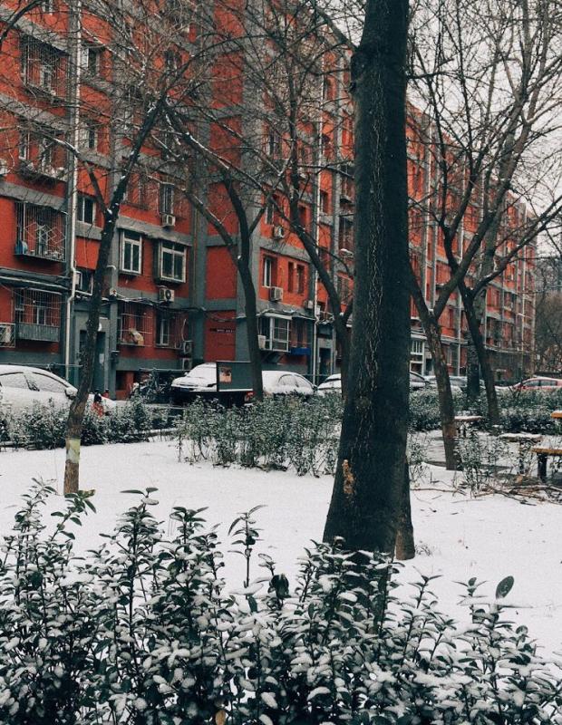 My neighbourhood one rare snowy day