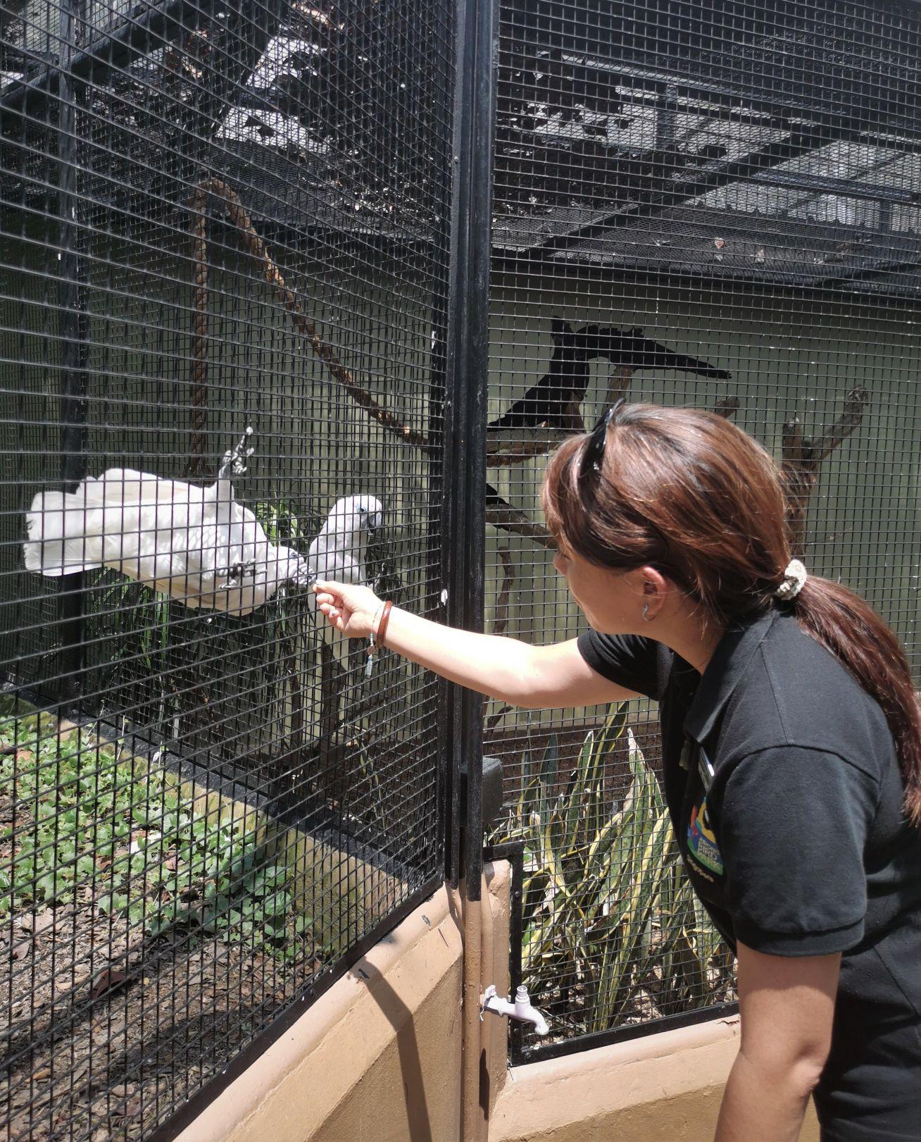 Interacting with a cockatoo in Parrot Paradise at Jurong Bird Park.
