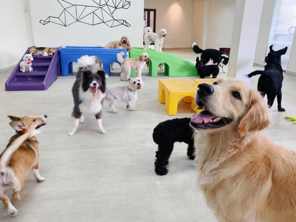 A day in my life involves seeing almost a dozen dogs in one room on a daily basis. Dogs under our care at The Snuggery get to participate in morning walks, playtime, brunch time, training sessions, nap time, and more.