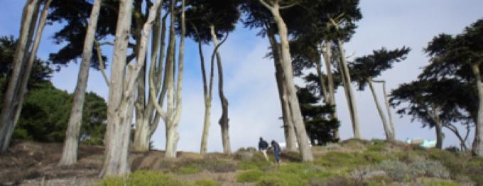 Zen (cover image)