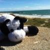 Big Cow (avatar)