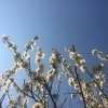 springforth (avatar)