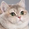 Audrey (avatar)