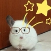 carebearz13 (avatar)