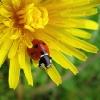 ladybirdkt (avatar)