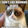 grumpy_cat (avatar)