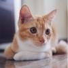 choo_choo (avatar)