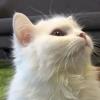 catmouse (avatar)