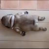 joanne_kang (avatar)