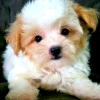 Mini Baby Ho (avatar)
