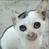 stefie (avatar)