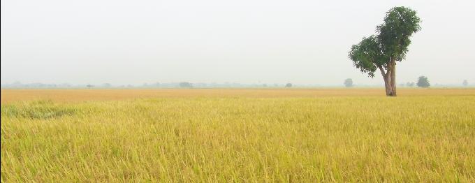 Numta kazalong (cover image)