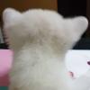 nysting (avatar)