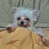 Rocky (avatar)