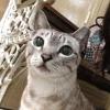bloopbloopbloop (avatar)