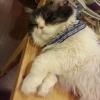 catlady  (avatar)