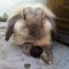 wendy12345678 (avatar)