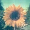 espoir (avatar)