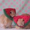 watermelohn (avatar)