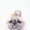 lynn_yi (avatar)