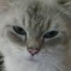 norinori (avatar)
