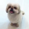 shinyi1130 (avatar)
