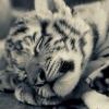 humptydumpty (avatar)