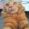 szarh_hzhj (avatar)