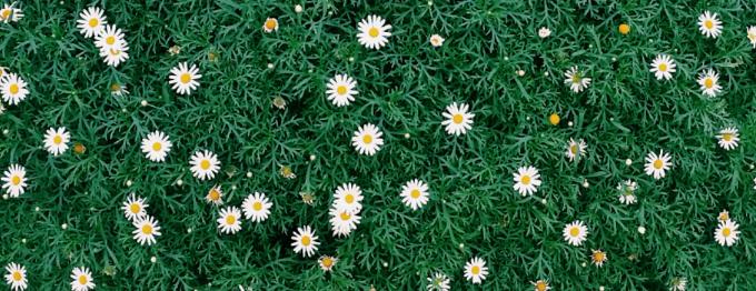 Jasmine (cover image)