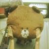 fionaw (avatar)