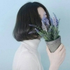 lavendershoots (avatar)