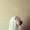 tinky (avatar)