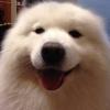 poopify (avatar)