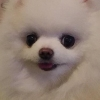 iamveryloser (avatar)